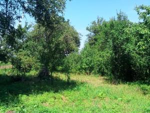 У Спартака ростуть в саду в Тисмениці: груші і сливи, яблука і вишні, черешні і малина, порічки і горіхи і ще багато чого...
